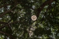 a lightbulb in a tree planted almost 50 years ago by the pioneers of Auroville